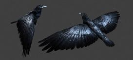 Obsidian - Crow